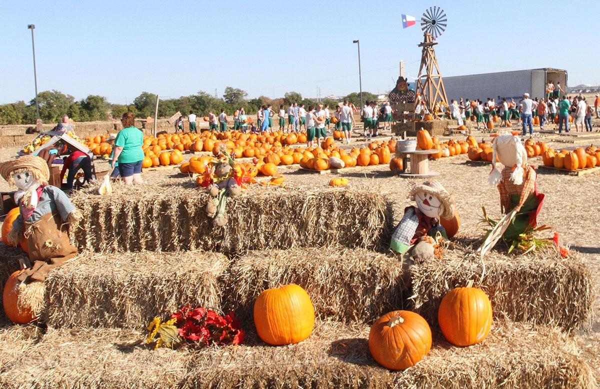 People visit Pumpkins on the Prairie to pick out the best pumpkin.